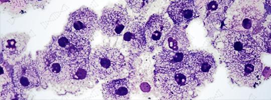 Superior Immune System