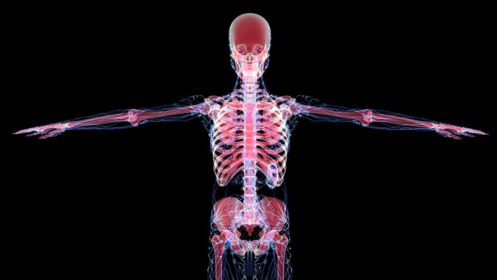 lymphatic system hormones