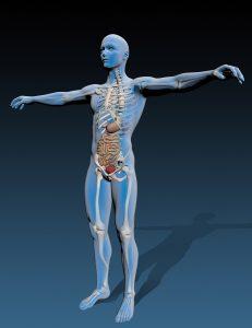 human body with internal organs_f1X8bOd_ 231x300